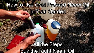 How to Use Cold Pressed Neem Oil in Your Garden: Recipe, Application & Routine - Buy the Right Oil!