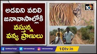 అడవిని వదిలి జనావాసాల్లోకి వస్తున్నా వన్య ప్రాణులు | Wild Animals Entering Villages | Kurnool
