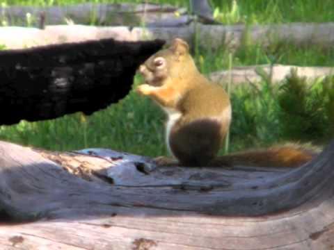 Yellowstone Wildlife Shots