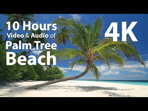 4K UHD 10 hours - Tropical Beach & Gentle Birds/Waves Audio window - relaxing, meditation, nature thumbnail