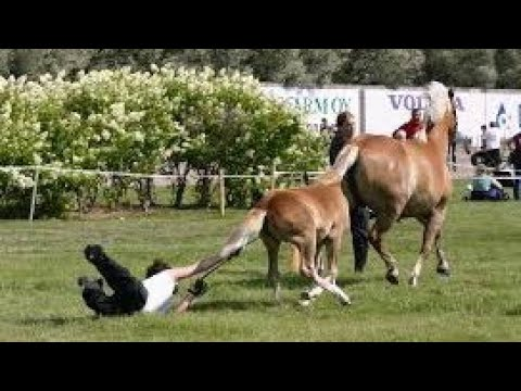 Horses are much more funny than cats - Funny horse videos 2018