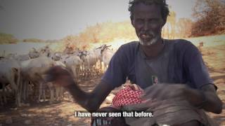 Somalia: Pastoralists struggle to survive under a severe drought