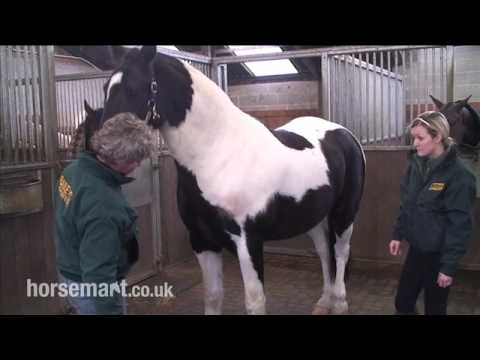 How to assess a show cob for feeding.mp4
