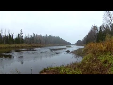 рыбалка на реке луга на налима