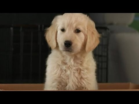 GoDaddy Ad Sparks Outrage From Animal Advocates
