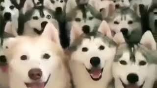 Funny dog videos 2018