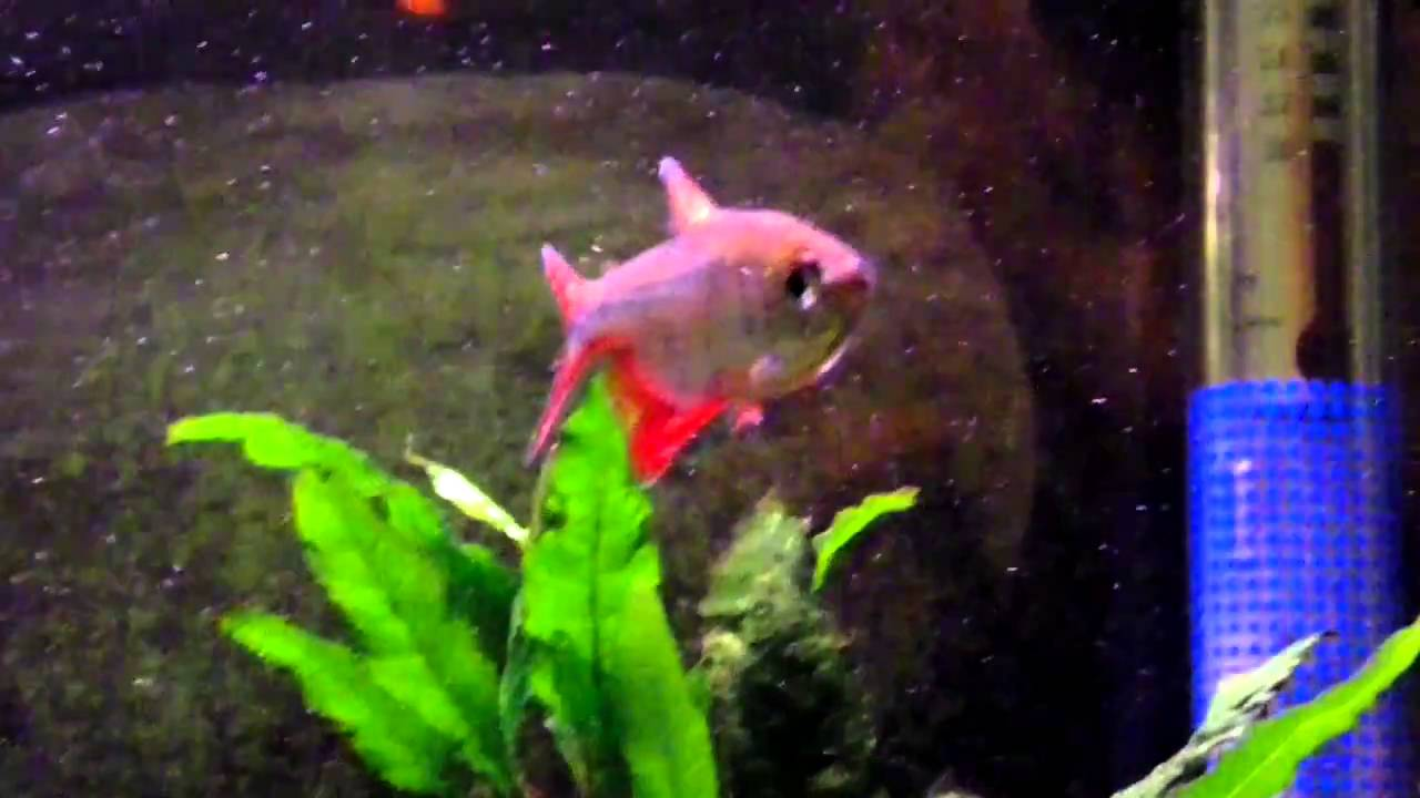 Tetra fish tank youtube tetra fish tank youtube 2017 for Youtube fish tank