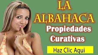 Propiedades Curativas de La Albahaca|Hierbas Medicinales, Usos y Propiedades Medicinales