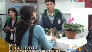 Lima: Asociación promueve el cultivo de plantas ornamentales