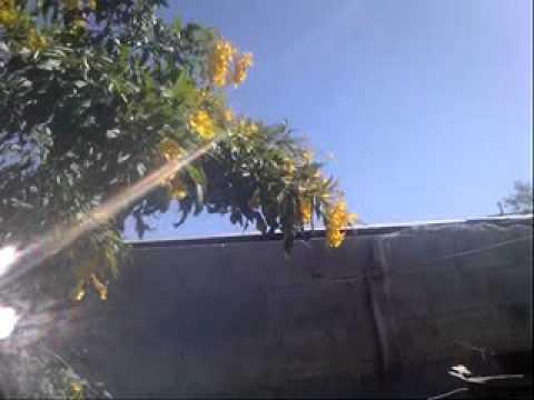 Balacera en Reynosa 6 Noviembre 2010 Parte 1.mp4