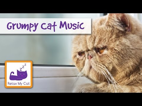 Music For Grumpy Cat soothing relaxing Sleepy Animals