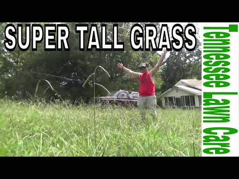 "Mowing Super Tall Grass And Liking It!!!!! ""Tennessee Lawn Care"""