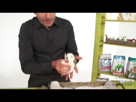 CONEJOS - Cómo sexar conejos