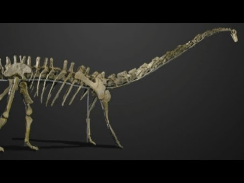 Buy a huge Diplodocus dinosaur for £600,000