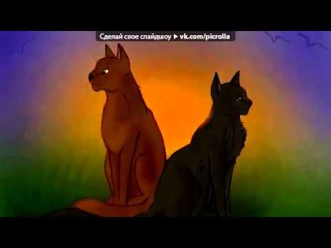 С моей стены под музыку Коты Воители  Ежевика и Уголёк  Белке    Кошка  Picrolla