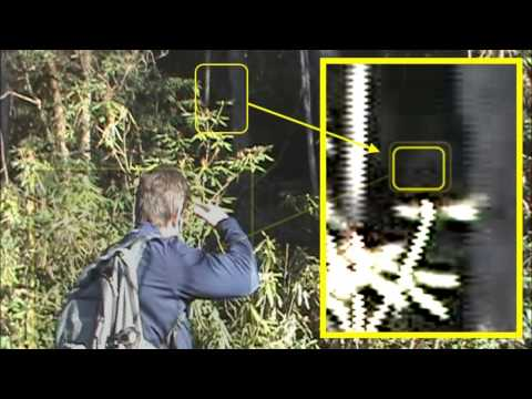 Bigfoot Research - One Eye Peeking
