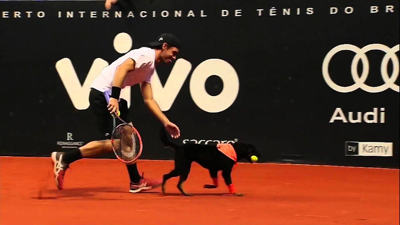 Kutyák voltak a labdaszedők a teniszmeccsen - videó