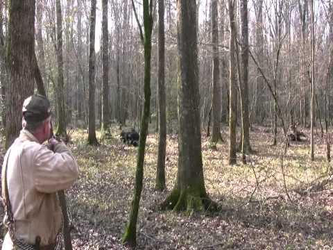 Pissed Off Charging Boar!  Wild Hog Hunting   Boar Hunting