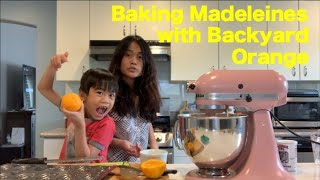 Backyard Oranges for Madeleines   Sunday Tea Time   Urban Gardening and Baking