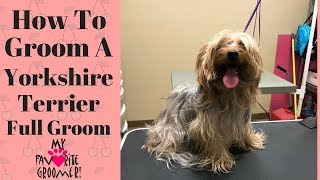 How to Groom a Yorkie (coconut)