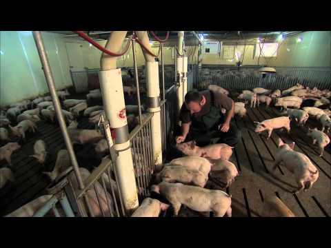 antibiotic use on farms revealed