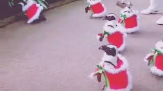 Funny video Christmas song