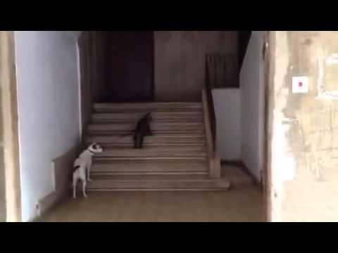 Правильный кот выгуливает щенка на поводке