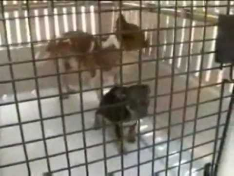 Visit NEWPORT BEACH CALIFORNIA - Puppy Mill Torture TOP MUNICIPAL PROFITS-  NEWPORT CIVIC DOG PARK