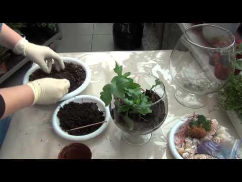 Фитодизайн растений