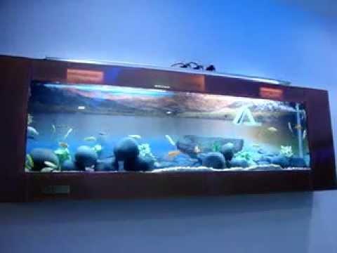 Wall Mounted Plasma Chicled Fish Aquarium In Chennai