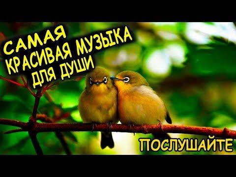 Очень красивая музыка для души, пение птиц - самая нежная музыка для души