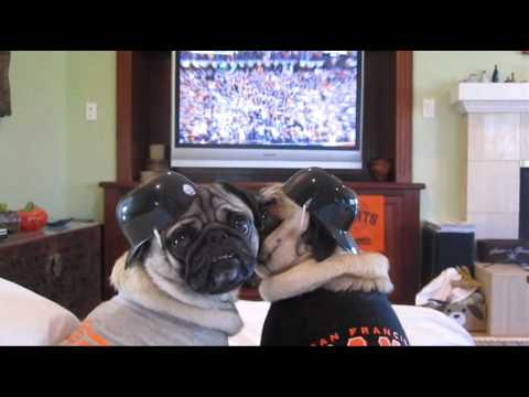 Giants Baseball Rally Pugs
