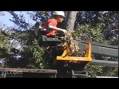 Gainesville - Gaston's Tree Service, LLC