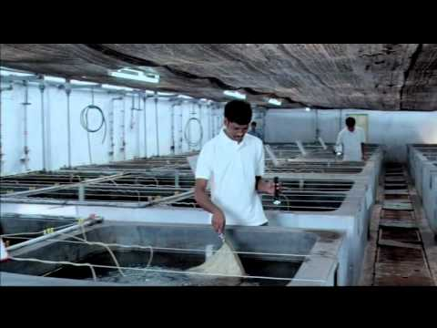 Mpeda   Rgca   Fish &amp  Shrimp Culture   Value Addition