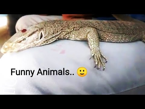 Funny Animals | Have you Seen This Video | Funny Pets| Dx Creation