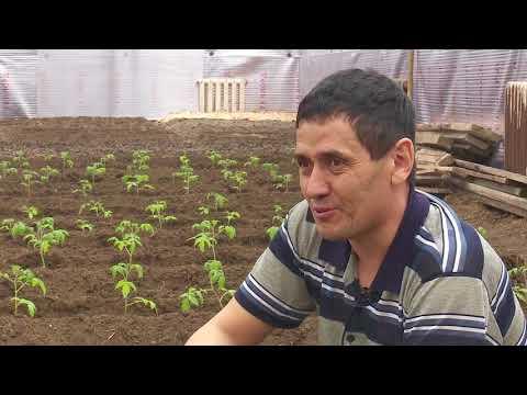Овощи под землей  начал выращивать предприниматель в Костанайской области