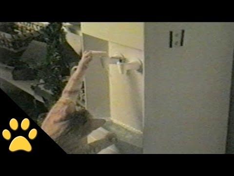 猫だっておいしい水が好き!ウォーターサーバーの水を自分で飲む猫