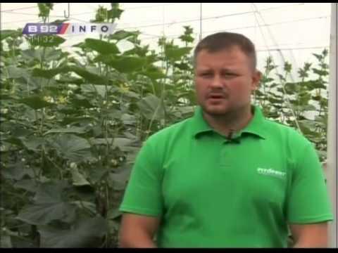 Kada i kako proizvesti krastavac i paradajz u plastenicima ?