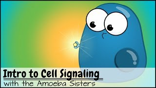 Intro to Cell Signaling