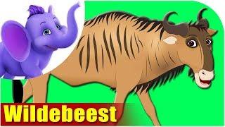 Wildebeest - Animal Rhymes in Ultra HD (4K)