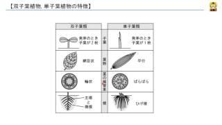 双子葉植物, 単子葉植物の特徴