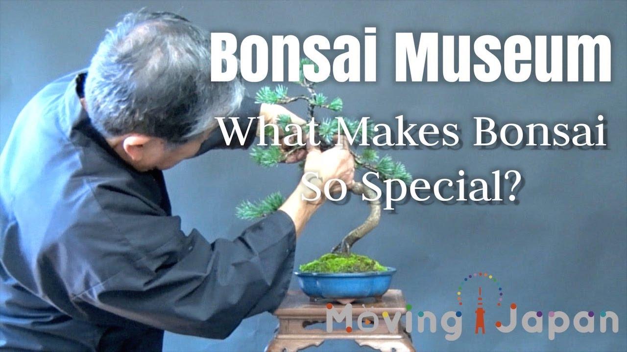 Bonsai Museum : What Makes Bonsai so Special?