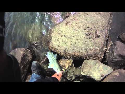 STRIPED BASS LURE FISHING 2012