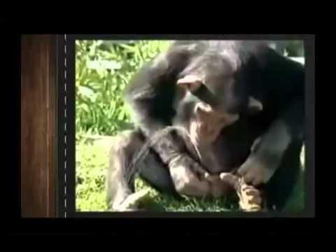 Супер Прикольные Смешные Животные!(3) Лови улыбку)  Угарный ржач! Подборка приколов с животными