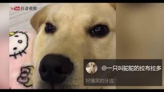 【抖音】超治愈可爱动物 TIK TOK 2018最火动物视频合集 (8) 萌宠
