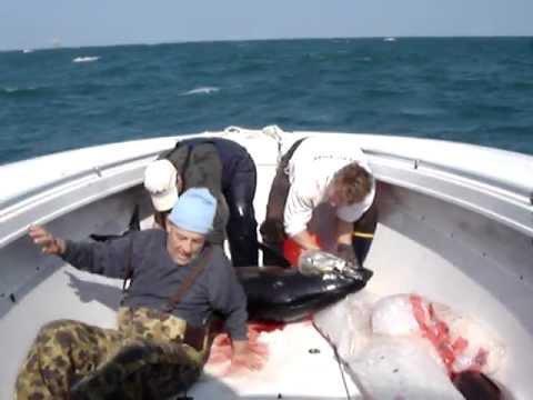 Yellow fin tuna gulf of mexico deep sea charter tampa for Deep sea fishing tampa