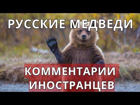 Русские медведи. Комментарии иностранцев.