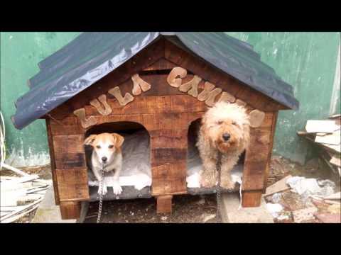 casas para perro XALAPA, VERACRUZ