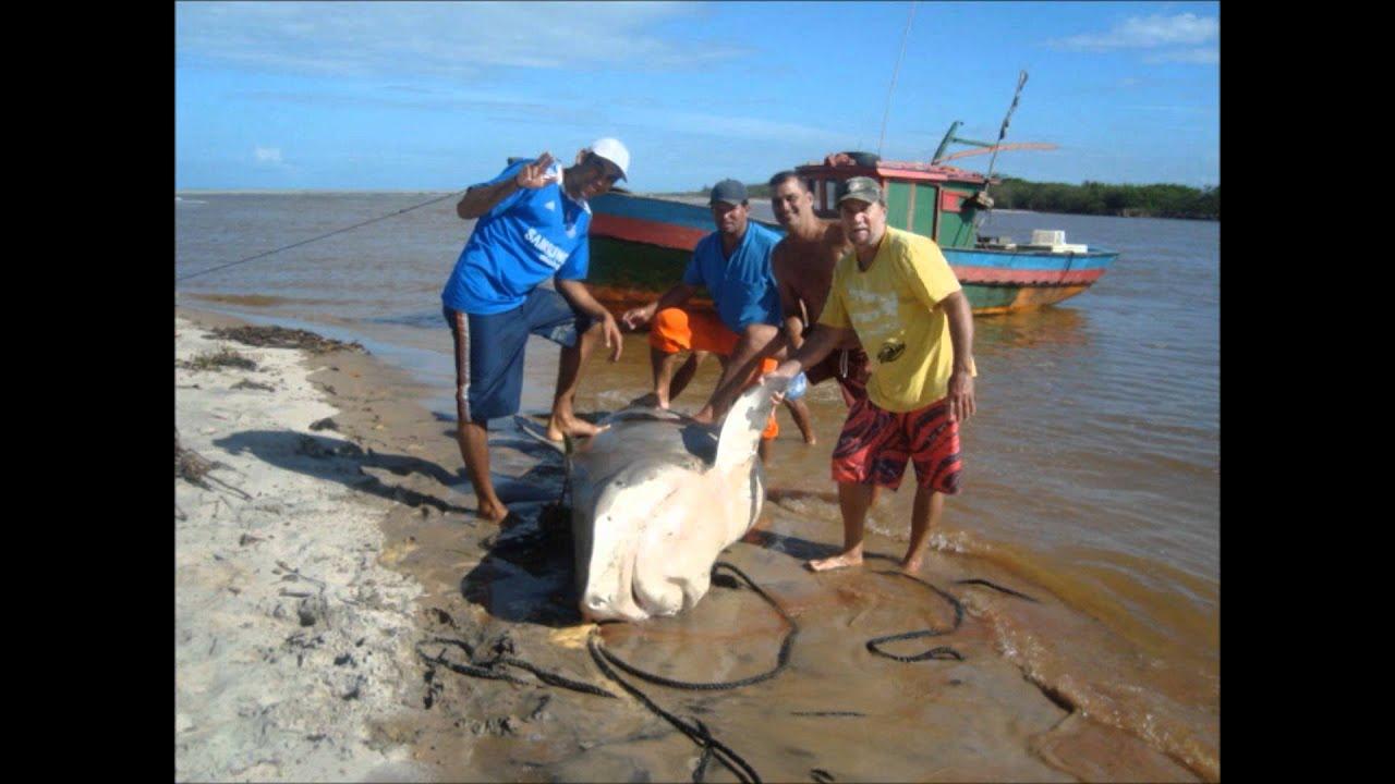 O TUBARÃO-Barra do Itabapoana-RJ - YouTube