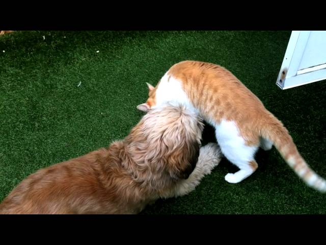 Dog and Cat Wrestling